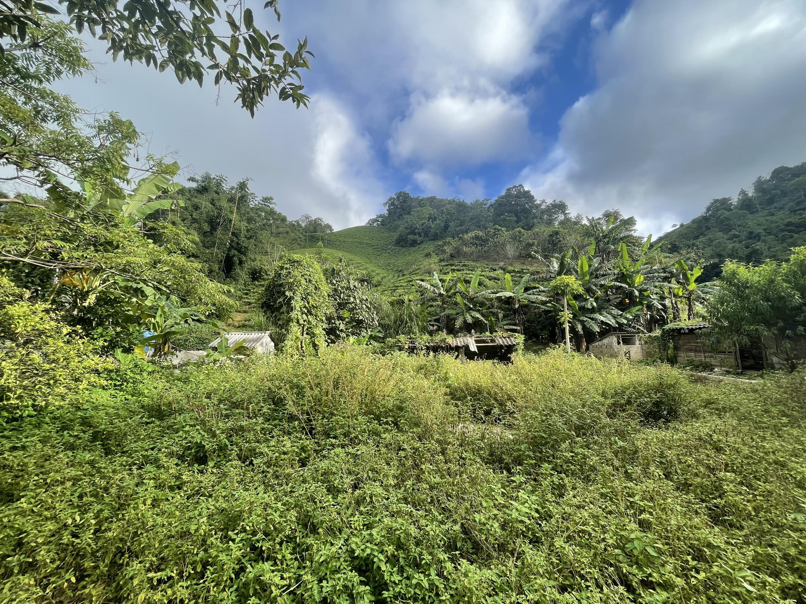 Bán lô đất tại Mộc châu vị trí siêu đẹp đón đầu sóng cao tốc Hòa  Bình - Sơn La